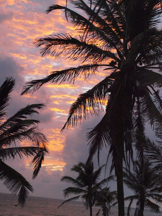 Sunset through the plam trees in Jericoacoara, Brazil